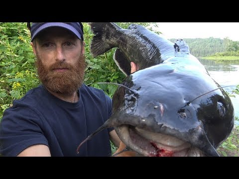 Catch and Cook Clean {Graphic} HUGE CATFISH!!!   OVERNIGHT CAMP and NIGHT FISHING!
