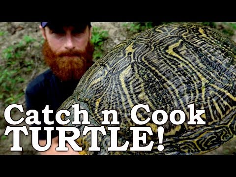Catch and Cook WORLD'S MOST INVASIVE TURTLE! Ep08   100% WILD Food SURVIVAL Challenge!