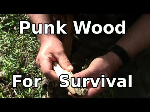 Punk Wood – Backwoods Tips For Fire Use