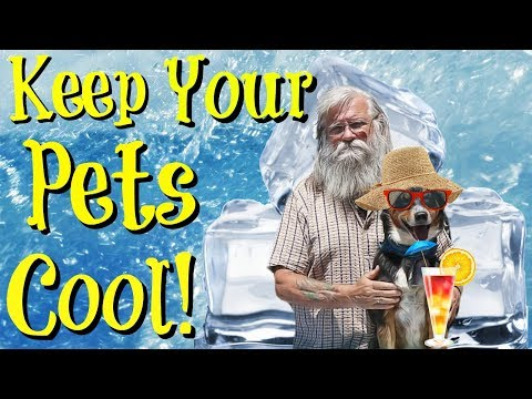Pet Cooling Ideas for the Summer! How to Keep Your Pets Cool.