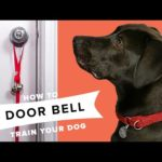 How To Door Bell Train Your Dog