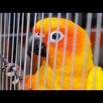 How to Travel with a Bird | Pet Bird